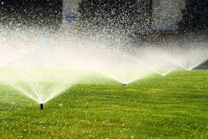 Basic Lawn Maintenance Tips